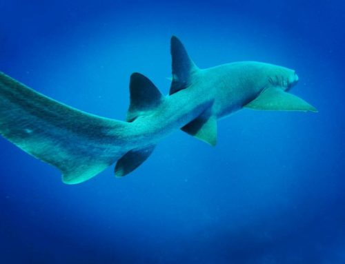 Why fake stories during Shark Week are hurting the ocean