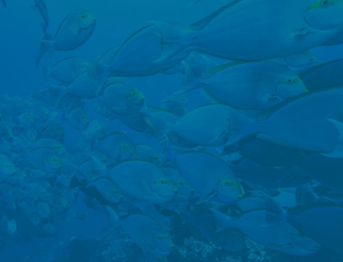 Effects of Overfishing on Ocean Health