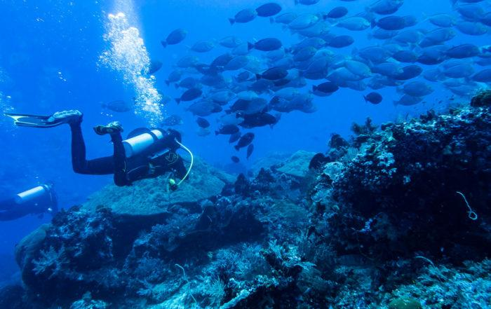 drift diving tips