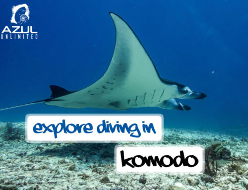 Best Drift Dives in Komodo