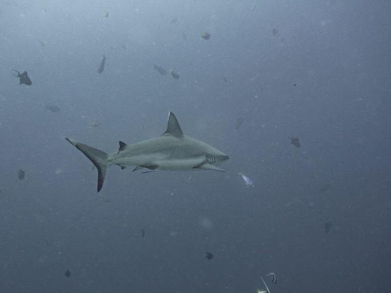 shark week fake