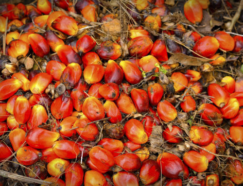Palm oil in Indonesia – Making sustainable choices