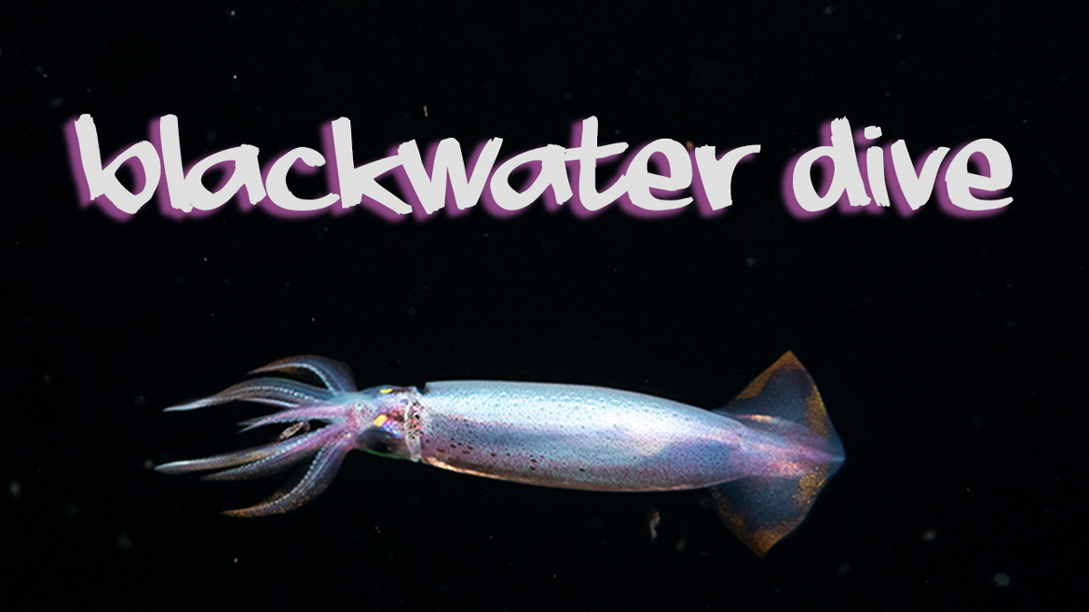 blackwater diving